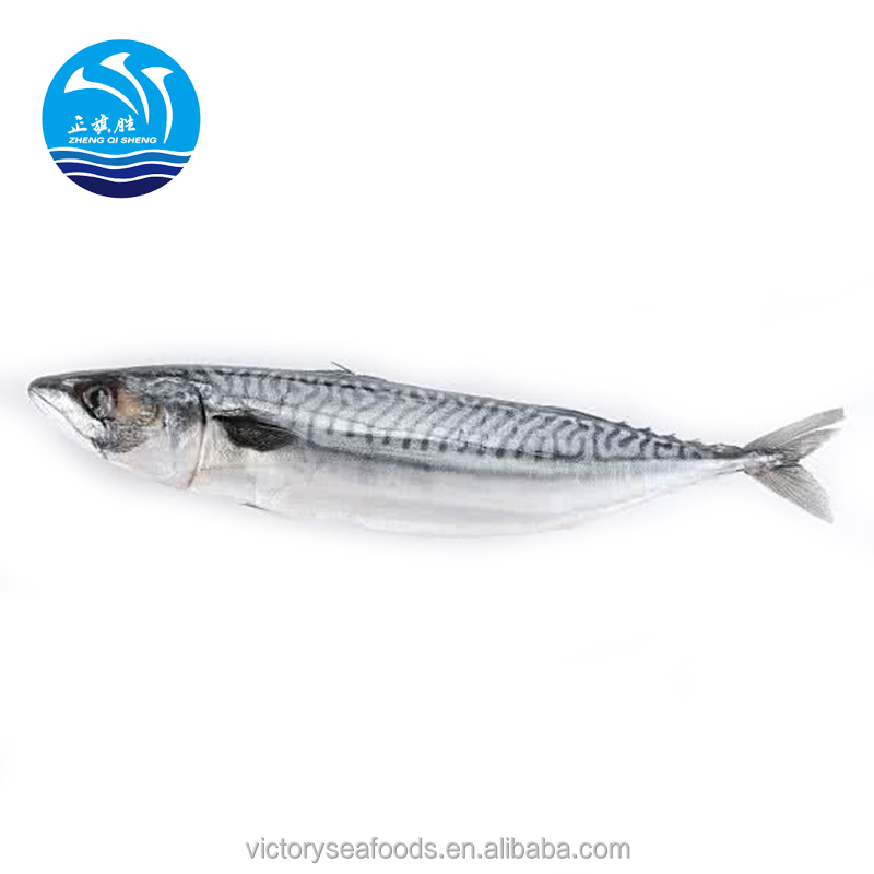 Frozen Pacific Mackerel Fish Frozen Seafood Fish Food For bait