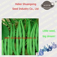 Good quality vegetable seeds SX Kidney Bean Seeds No.1409