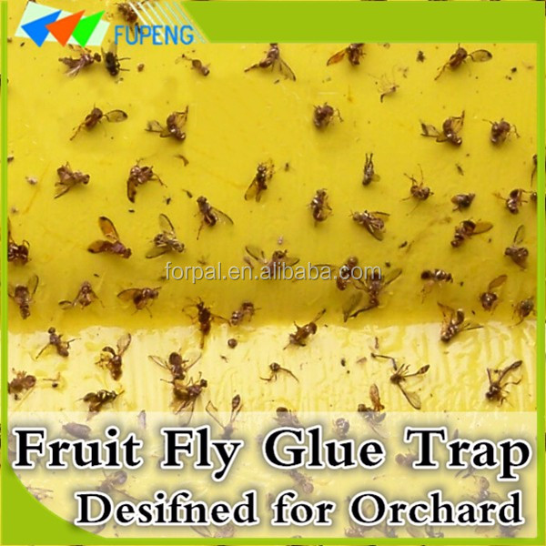 FUPENG Free Sample Eco-Friendly Fly Catcher Pest Guard Fruit Fly Killer