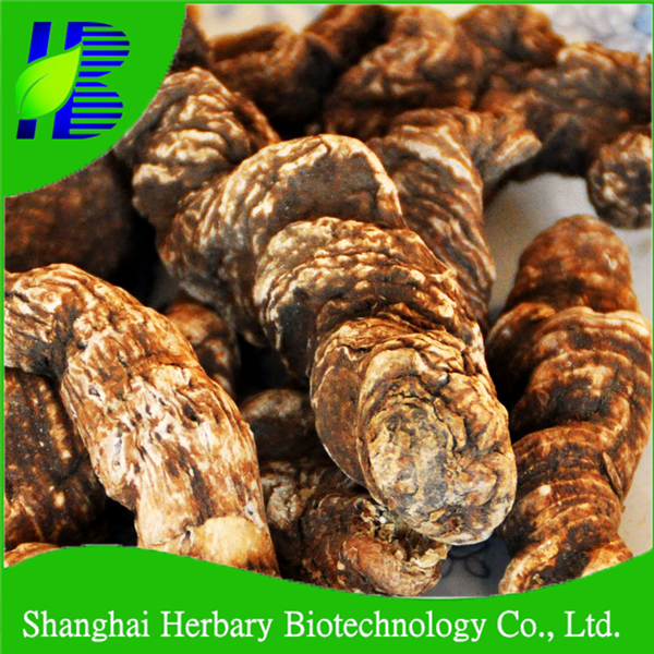 Shanghai Herbary Supply chinese raw herbs wholesale Rhizoma Paridis