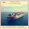International Shipping company in guangdong