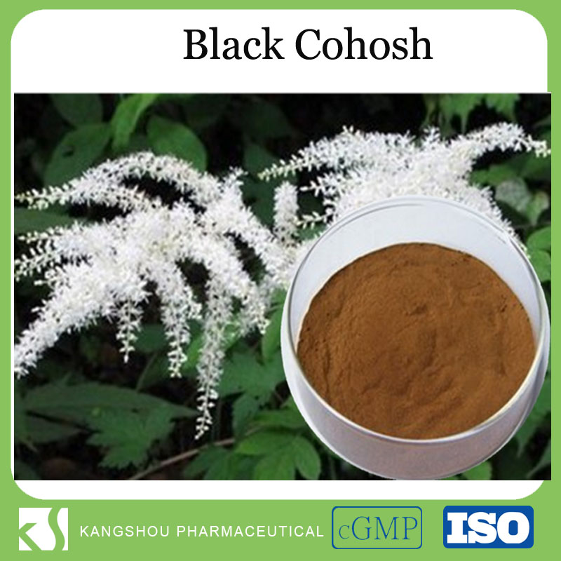 Top quality black cohosh extract natural black cohosh P.E Black cohosh