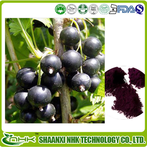 Free Sample Good taste and Water Solubility Blackcurrant Juice Powder