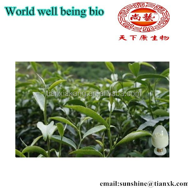 Free Samples Bio Green Tea Extract Tea Polyphenols 95% 98% / Black Tea Powder Extract EGCG / White Tea Extract