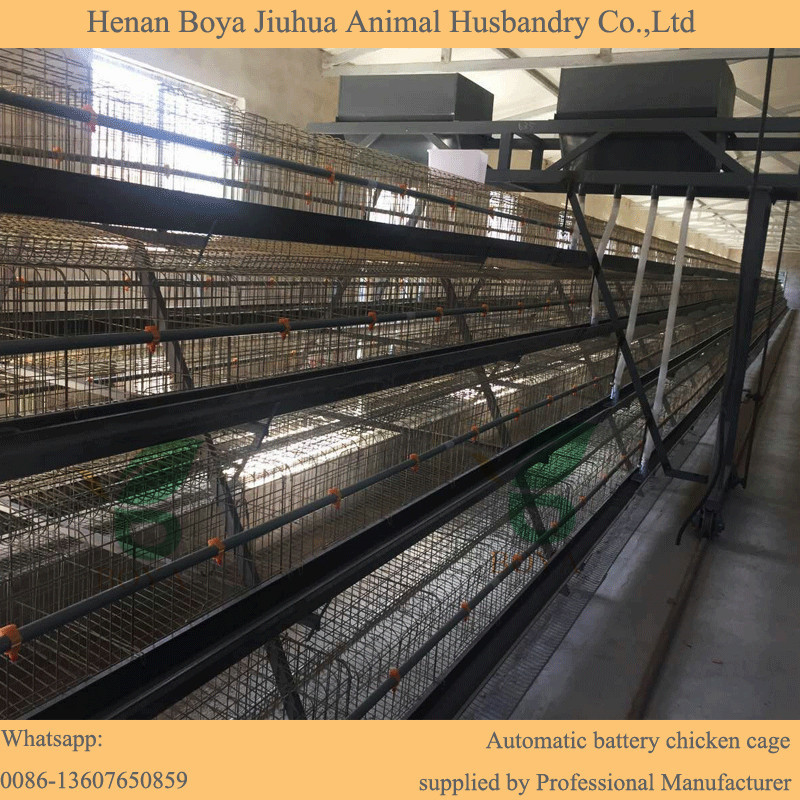 Automatic chicken egg layer cages poultry farm house design