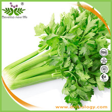 Good fresh Natural High Quality with Best Price 98% Apigenin Celery seed Extract