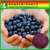 Natural Organic Acai Berry Extract 20:1/ Acai Berry Extract Pharmaceutical Grade