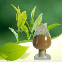 factory green tea polyphenol