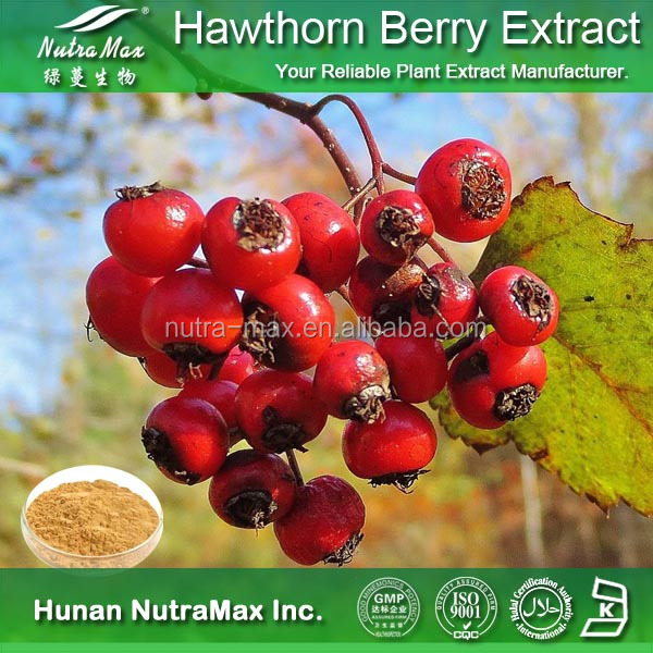 Hawthorn Berry/Leaf Extract in bulk, 2-95% Flavone UV or 0.2-0.4% Vitexin