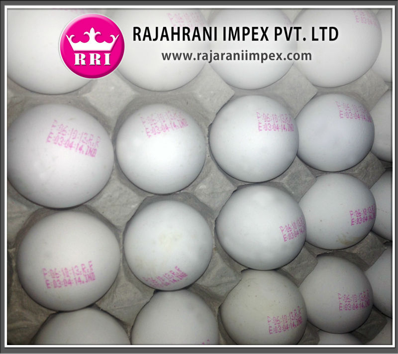 White table eggs price from India