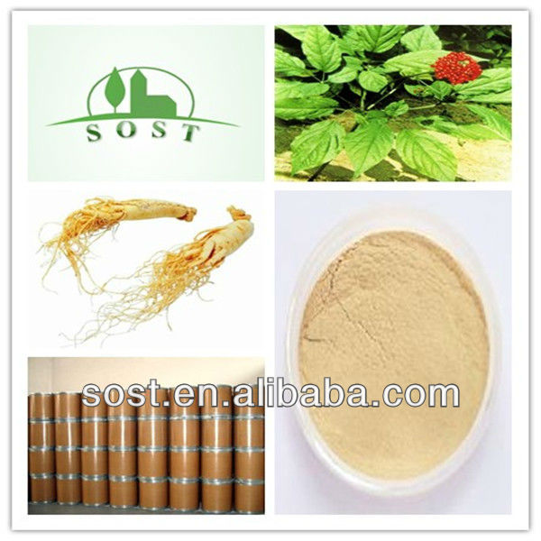 Anti-aging Ginsenoside Panax Ginseng Extract