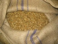 100% Maui Select Green Coffee 100lb burlap