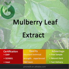 mulberry leaf/mulberry juice powder/mulberry leaf extract