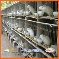 High Quality Galvanized Welded Rabbit Cage Wire Mesh/High Quality Rabbit Cage/Rabbit Farming Cage
