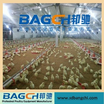 Poultry Feed Pan System for Broiler/Chicken Farm