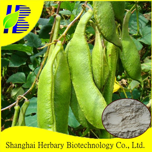 Natural herb medicine extract, white kidney bean extract, alpha-amylase inhibitor for sliming