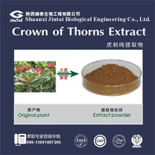 factory supply natural herb crown of thorns extract powder