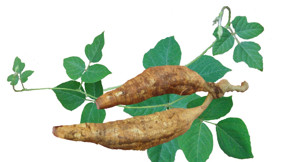 Kudzu root extract powder 98% puerarin