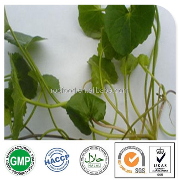 Hot sale natural herbs powder asiaticoside gotu kola extract