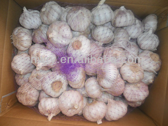 2015 New crops fresh garlic