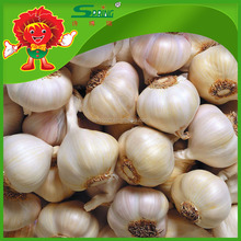organic White Garlic with Competitive Export Price good taste