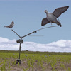 Rotary Pigeon Magent Decoy Hunting Machine