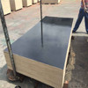 plywood concrete form/waterproof plastic film faced plywood for construction/shuttering plywood