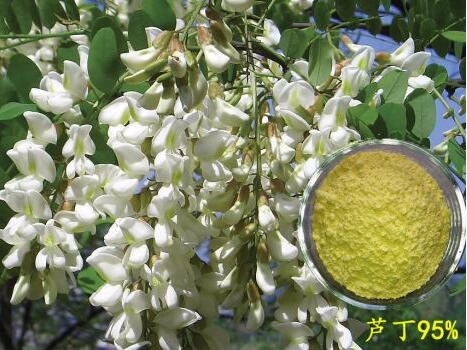 Reasonable price of pure natural plant extract rutin NF11/EP6.0