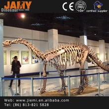 Museum Quality Resin Realistic Dinosaur Skeleton For Sale