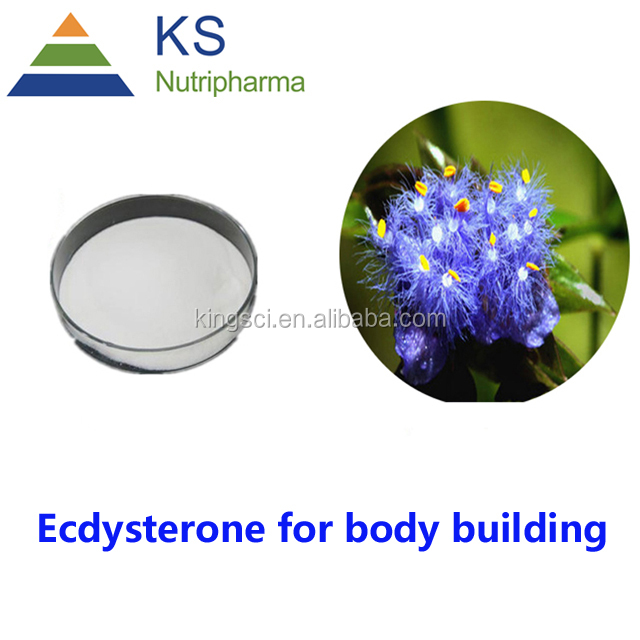 Body building Cyanotis arachnoidea extract Ecdysterone,beta Ecdysterone powder