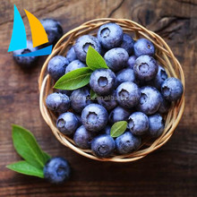 Best Reasonable Price Frozen Fruit rich in nutrition blueberry price