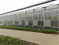 large size venlo type glass hydroponic greenhouse for sale