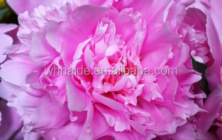 High concentration peony fragrance for cosmetics