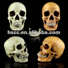 Good Quality Ultra-high simulation 1:1 resin skull model