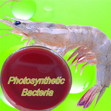 Photosynthetic Bacteria for aquaculture feed or cleanning water,Compound Bacteria Feed Additives for Fish