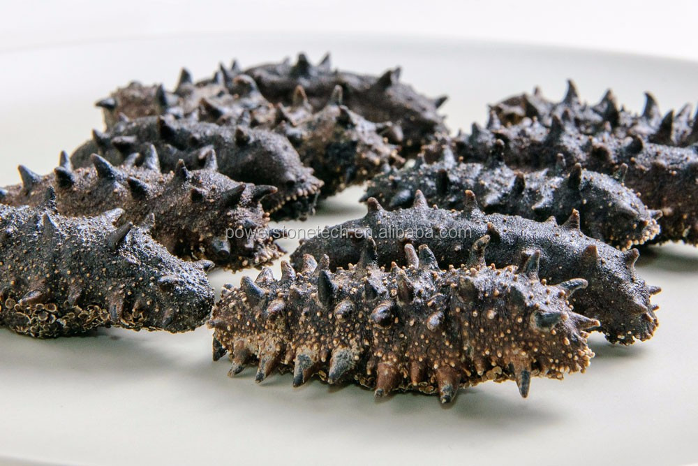 High Quality Dried Wild Sea Cucumber Low Salt