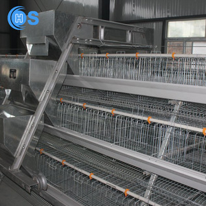 Alibaba china High quality used chicken house equipment} with great price