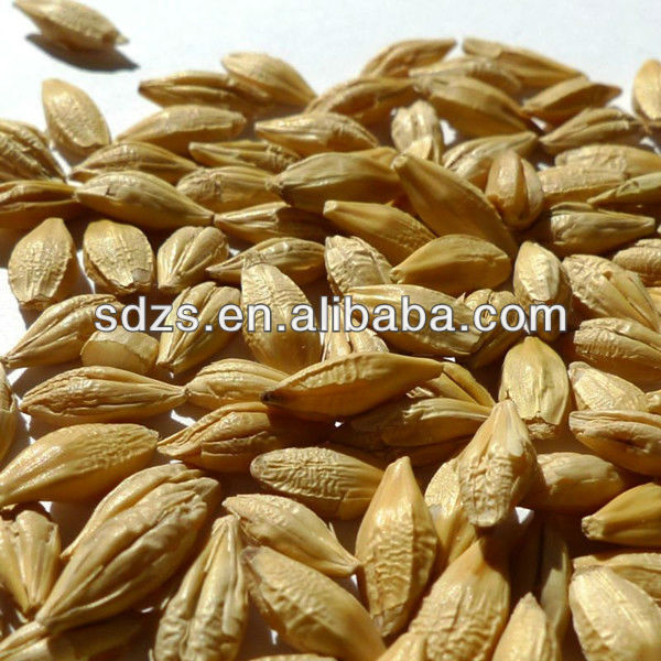 premium barley for beer quality