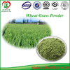 GMP Manufacturers Supply Organic Wheat Grass Powder