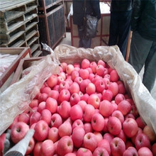wholesale fresh apple specifications export