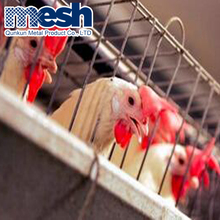 Chicken cage/broiler poultry farm equipement/laying machine