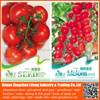 hybrid vegetables for high yield tomato seeds
