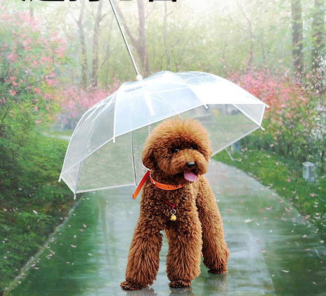 dog umbrella.jpg