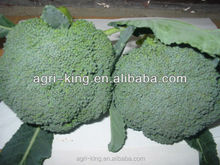 sell A/B grade frozen broccoli best vegetable