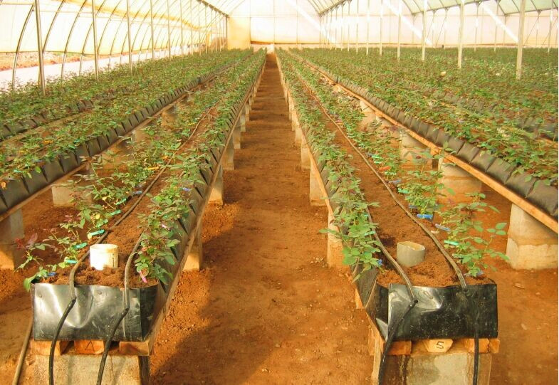 Soilless growing trough for roses tomatoes buy soilless for Soil less farming