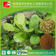 Alibaba China supply 10:1 Yerba Mate powder,Plant extract yerba mate p.e,Yerba Mate Wholesale