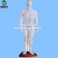 Acupuncture point male Model 50CM BIX-Y1007