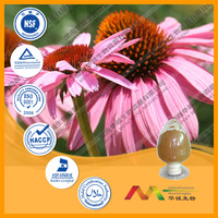 ISO certified Echinacea angustifolia Extract by chinses manufacturer