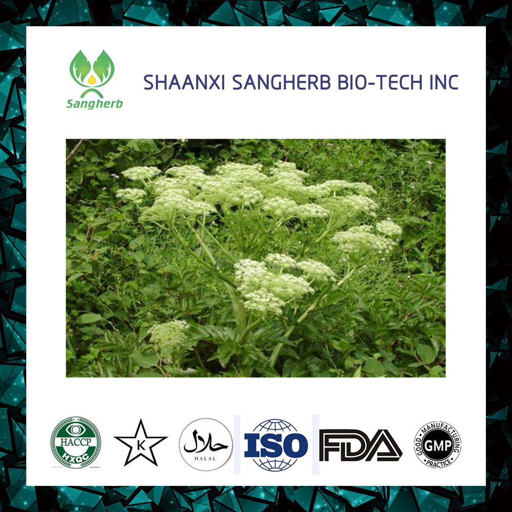 High Quality Natural Angelica Sinensis Extract 1% Ferulic Acid powder HPLC
