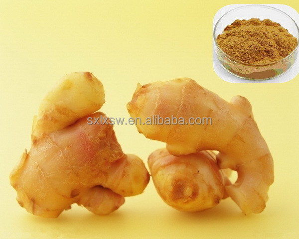 100% pure bio extract fast speed 100% natural dry ginger extract